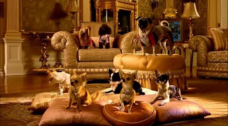 beverly hills chihuahua 2, beverly hills chihuahua 2 cast, beverly hills chihuahua 2 full movie, beverly hills chihuahua 2 lala, beverly hills chihuahua 2 characters, beverly hills chihuahua 2 dogs, beverly hills chihuahua 2 cast change, beverly hills chihuahua 2 movie, beverly hills chihuahua 2 trailer, beverly hills chihuahua 2 free