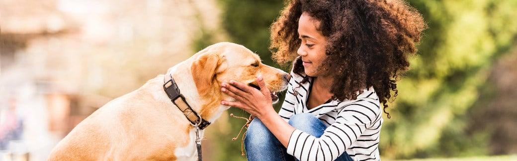 Kutyaharapás megelőzése és kutyaharapás seb kezelése