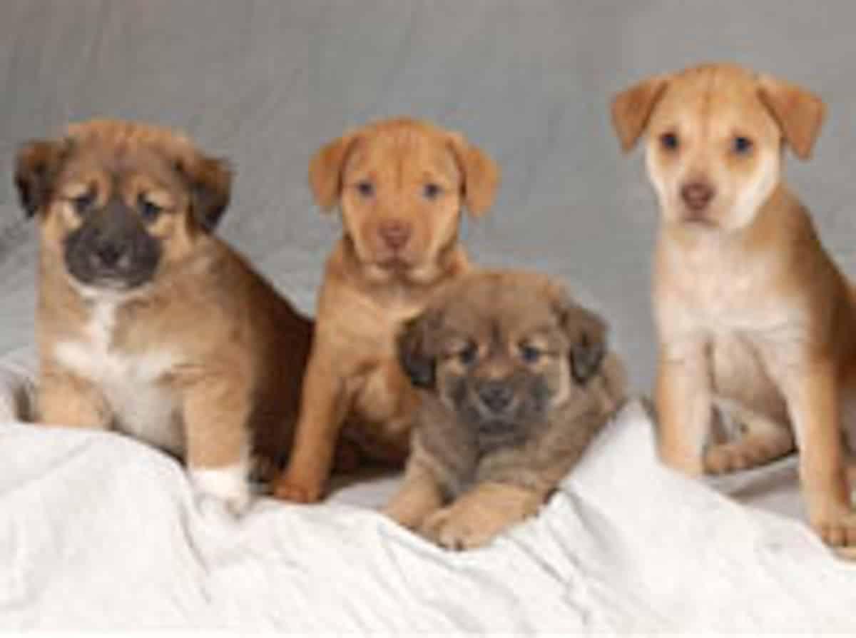 Kutyafélék és a kutyabetegség