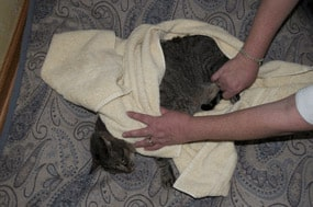 Sinus bradycardia macskákban