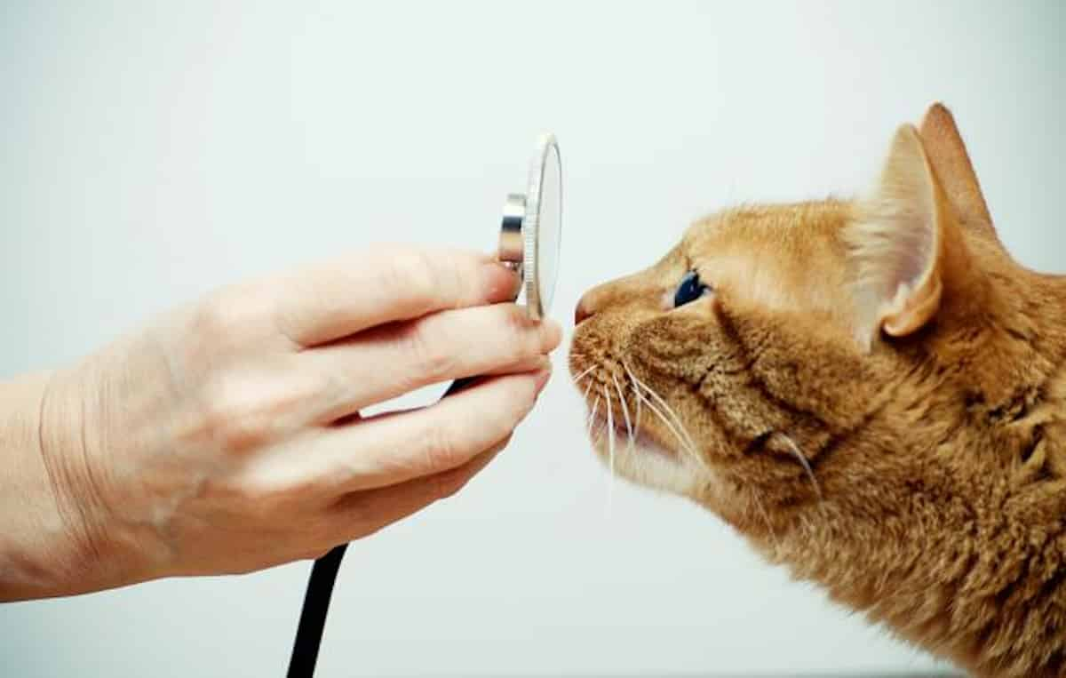 Entrópia macskákban