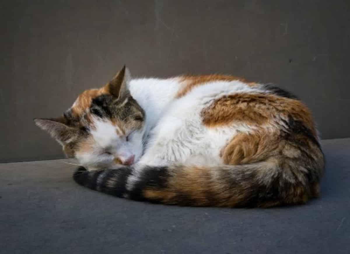 Polipok rektoanális a macskákban Polipok tünetei