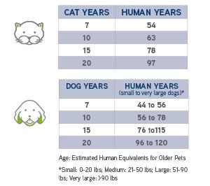 Idős háziállatok gondozása