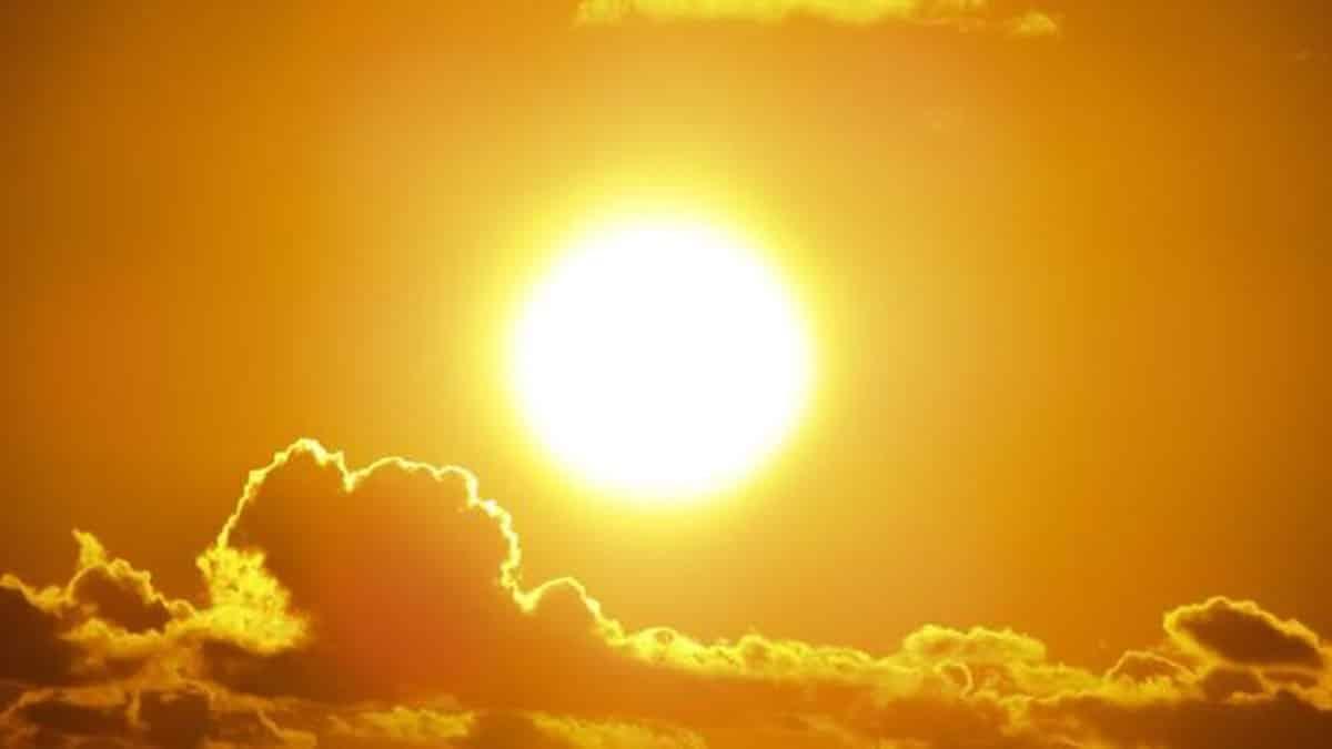 Meleg időjárás hőség a háziállatok biztonsága