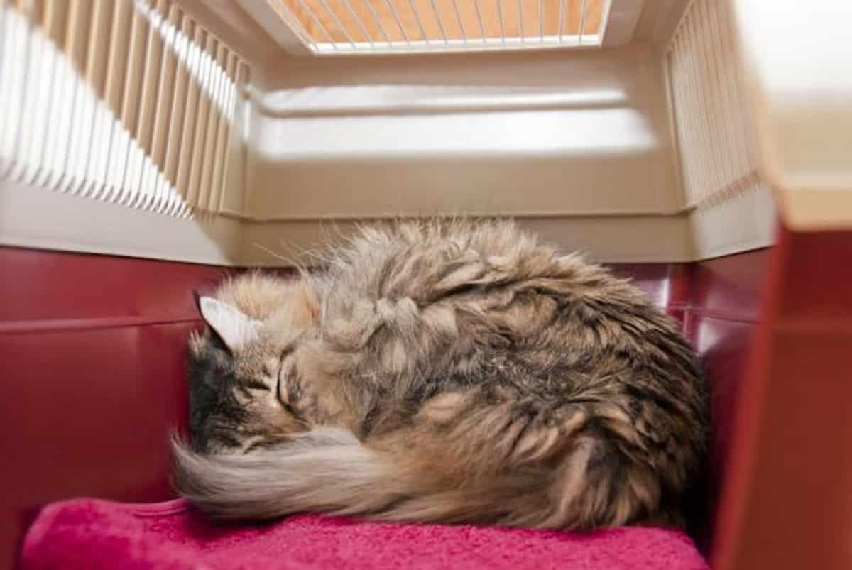 Pattanások és pattanások fajtái pattanások okai macskáknál
