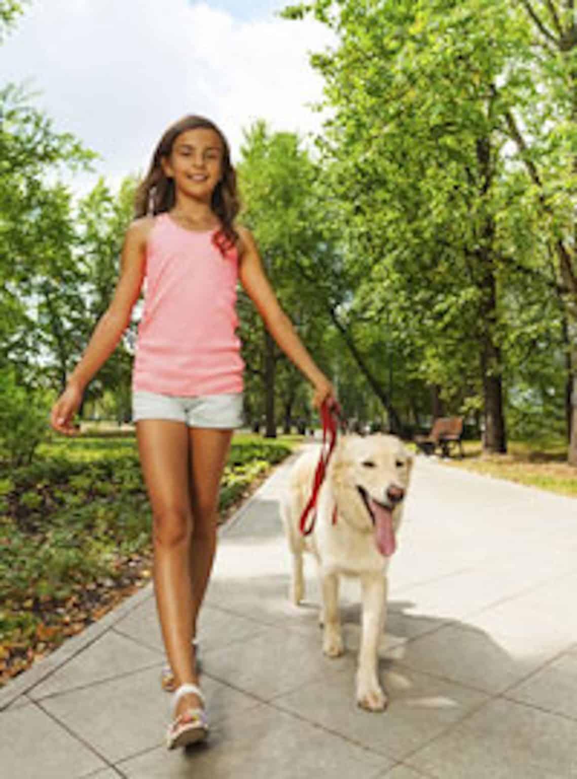 kutya séta tanítás