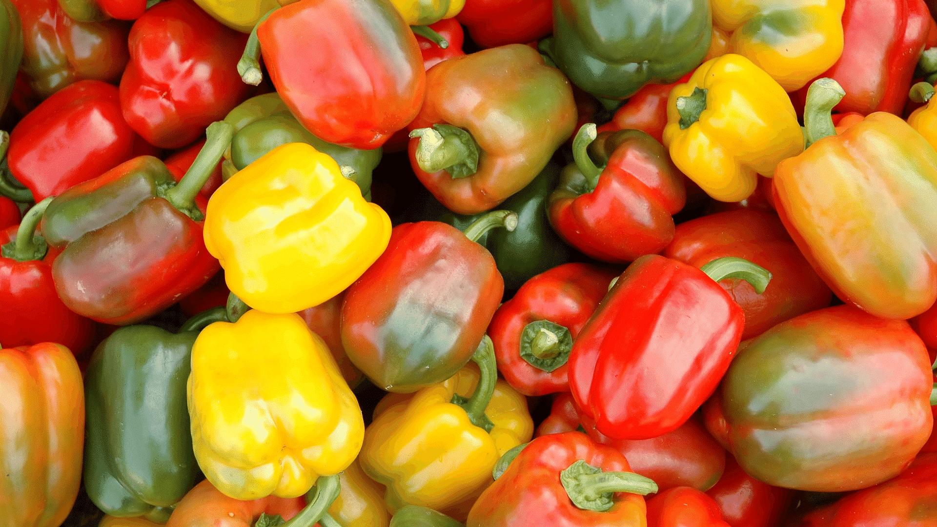 Az édes paprika gyengéd, meleg évszakban termő növény és a paradicsom rokona. Így ültethet és termeszthet paprikát a kertjében!