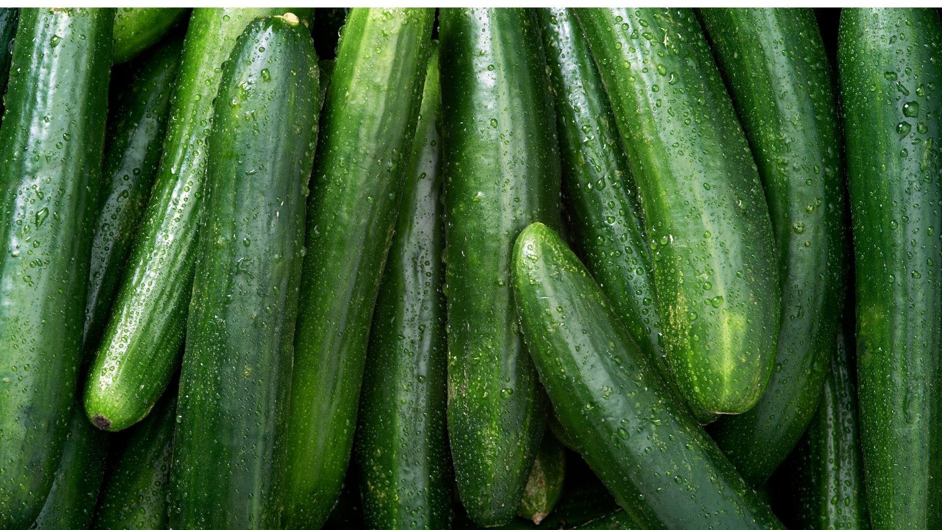 Nézd meg, hogyan tudod az uborka vetése és termesztése és betakarítani.