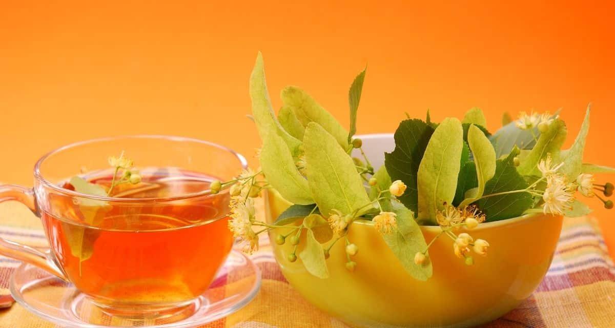 A hárs tea hatása tinktúrák, teák és más italok összetevőket igényelhetnek a két különböző hársfa egyikéből: a  Tilia cordata-ból, a kis levelű európai hársfából (más néven téli hársfából) vagy a Tilia platyphyllos-ból, más néven nyári hársfából.