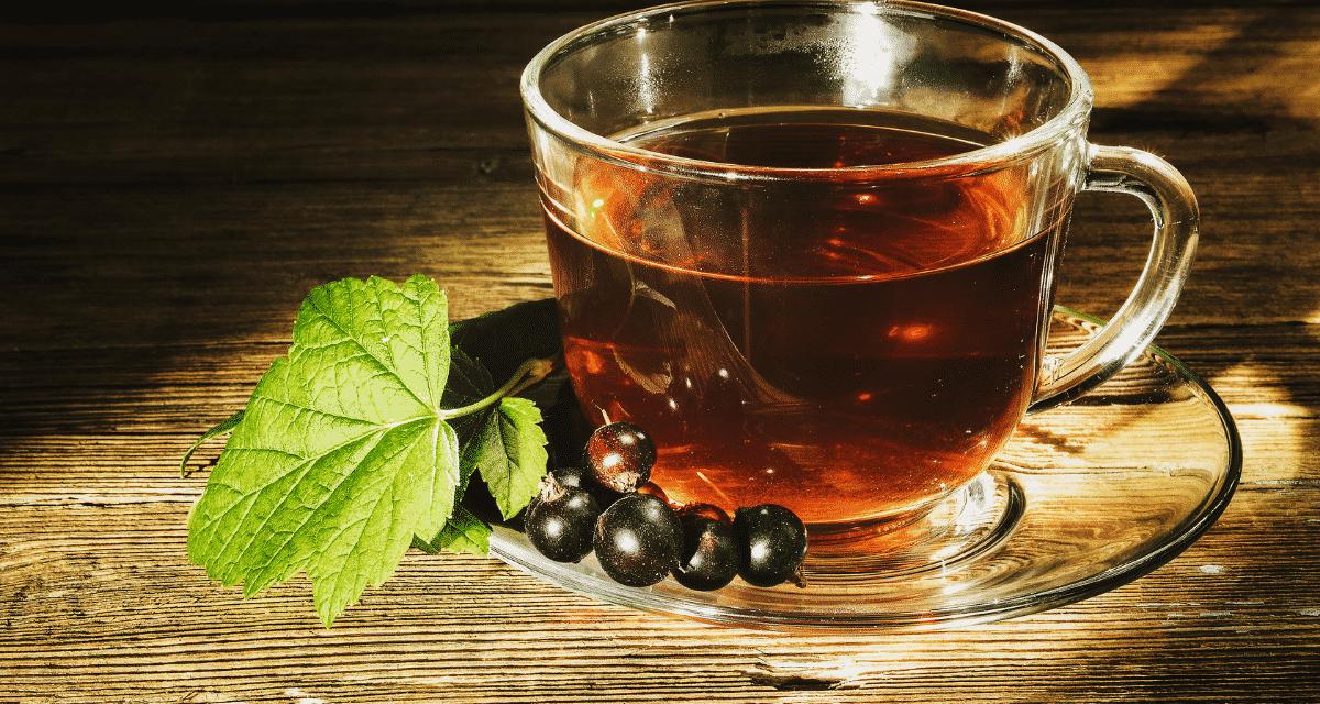 Csak a második helyen áll az Earl Grey tea, mint Európa és Észak-Amerika legnépszerűbb fekete teája, a fekete ribizli levél tea gyümölcsös ízéről és rengeteg egészségügyi előnyéről ismert. Nyugtató és természetesen édes, ez a fajta tea csak egy a sok prémium íz közül, amely megtalálható a teában. Mielőtt elkészítené magának egy csésze fekete ribizli levél teát, szánjon egy percet arra, hogy felfedezze eredetét és egészségügyi előnyeit.