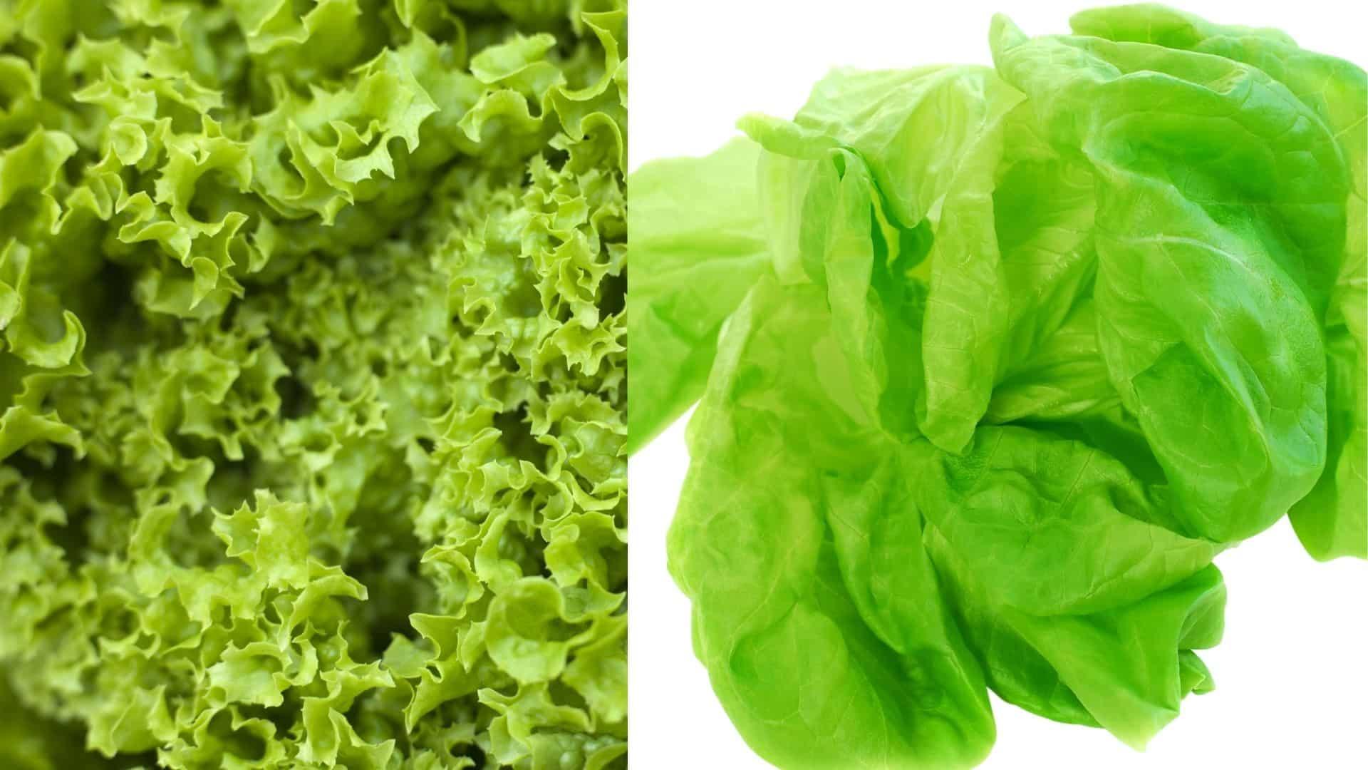 A fejes saláta az egyik kedvenc kerti zöldünk, mert jóval jobb - mind ízében, mind A-vitamin-tartalmában! Ültesd tavasszal, két héttel a fagy előtt.