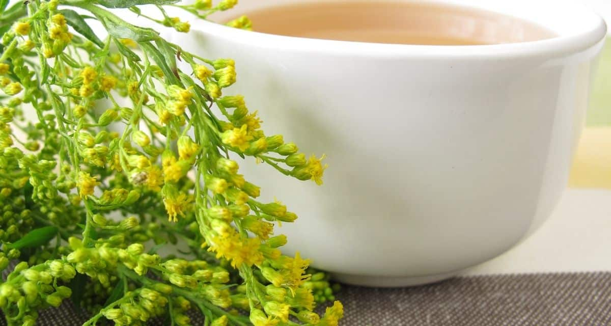Az aranyvessző tea (más néven solidago canadensis vagy s olidago virgaurea ) növényi kiegészítőként használt virágos növény, amelyet régóta használnak a népi gyógyászatban. Úgy gondolják, hogy a növény föld feletti részeinek gyógyászati értéke van.