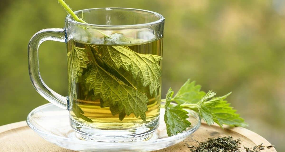 A rossz név ellenére úgy gondolják, hogy a csalán - egy virágos növény - csalán tea jótékony hatása és egészségügyi előnyökkel jár (és bizonyos kockázatokkal is jár).