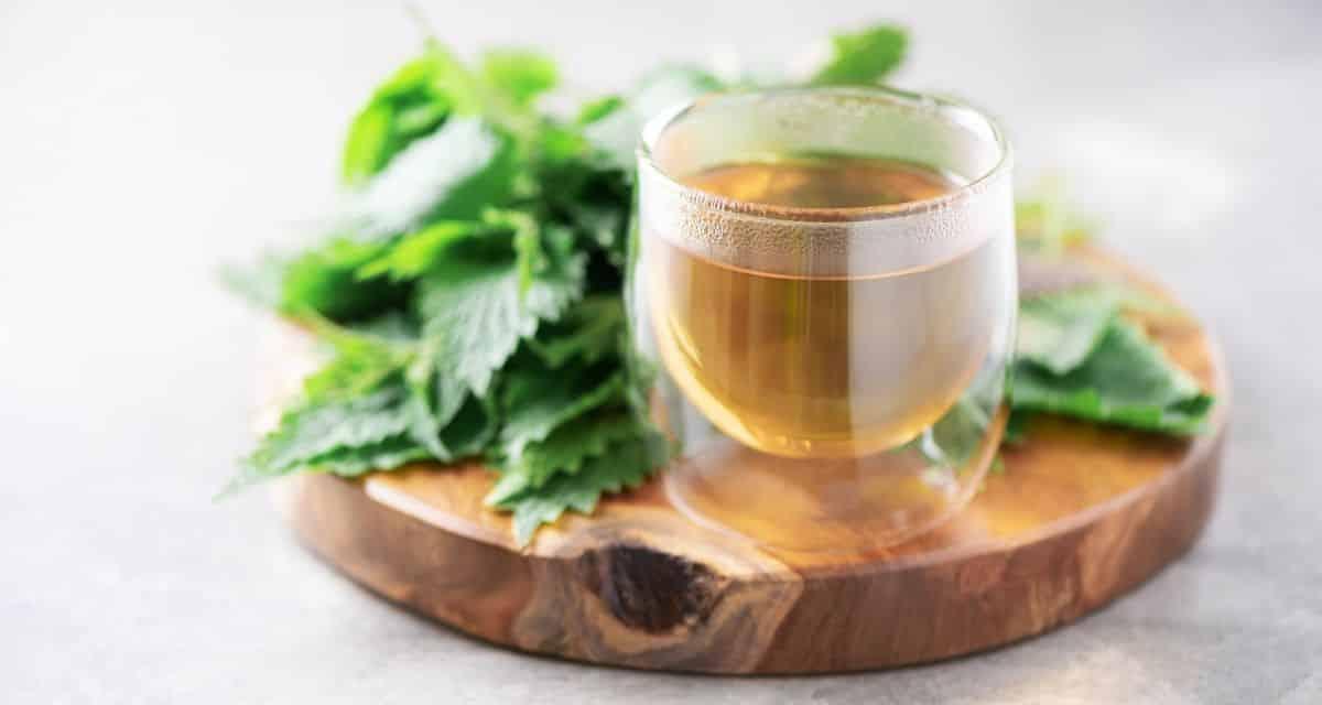 A csalángyökér tea előnyei megalapozatlanok, de hasznosak lehetnek a prosztata megnagyobbodásával járó tünetek enyhítésében. A növény föld feletti részei szintén ízletes ételek.