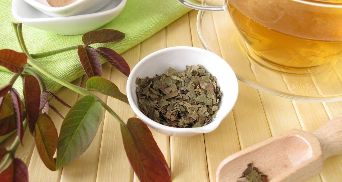 A közelmúltban a diófa (Juglans regia) finom és könnyen feltörhető dióira nagy figyelmet fordítottak, mivel gazdag omega-3 zsírsav- és egyéb gyógyító tápanyagok találhatók benne. De a gyógynövényt évszázadok óta felismerték a diófa másik részének - hegyes zöld leveleinek - gyógyító tulajdonságait. Igen, de tulajdonképpen a diófalevél tea mire jó?