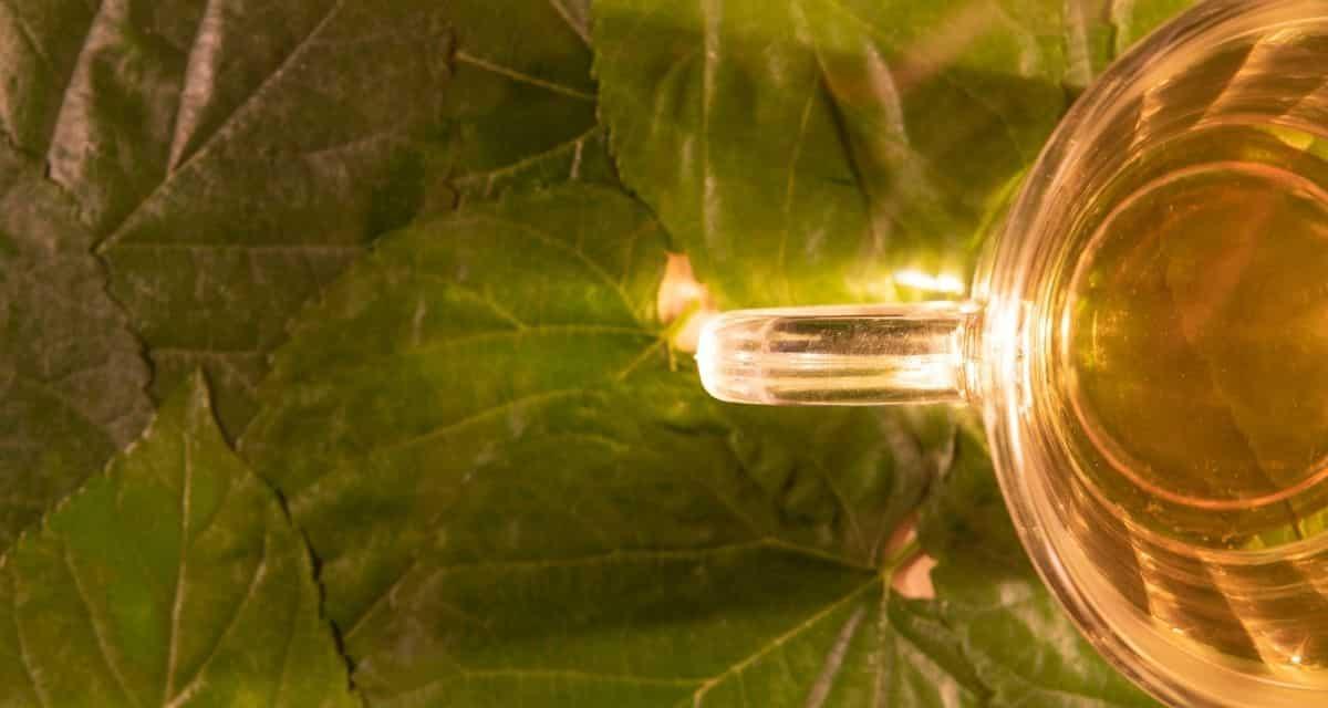 """A szárított szederlevélből népszerű erdei szederlevél tea készítenek, de szárítás előtt erjesztve az íze """"nagyon szép"""" -ről """"nagyon csodálatosra"""" változik"""