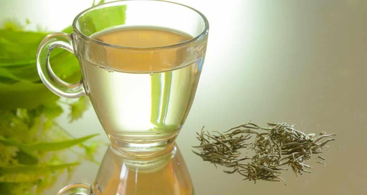 A nagyon könnyű és finom ízű és megjelenésű fehér tea úgy tűnik, hogy nincs benne koffein. A fekete és a zöld teák ismertek koffeintartalmukról, de a fehér teában van-e koffein? Megvizsgáljuk ezt a kérdést, valamint adunk néhány tippet a fehér tea koffein kapcsolatban.