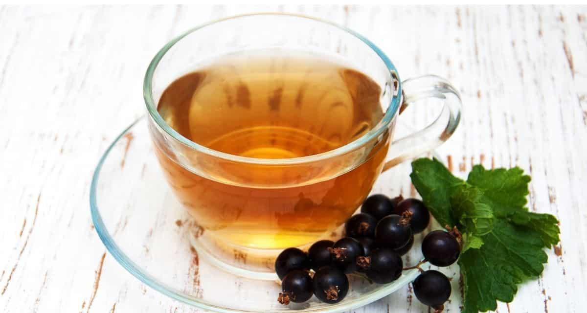 Minden bogyóbarát számára a fekete ribizli messze nem hétköznapi gyümölcs. Mély és gazdag lila színű, finom és nagyon sokoldalú, ezek a bogyók tele vannak antioxidánsokkal fekete ribizli tea és C-vitaminnal. Valójában sok más gyümölcsöt meghaladhatnak, amelyeket általában a fontos tápanyagok legjobb forrásának tartunk.