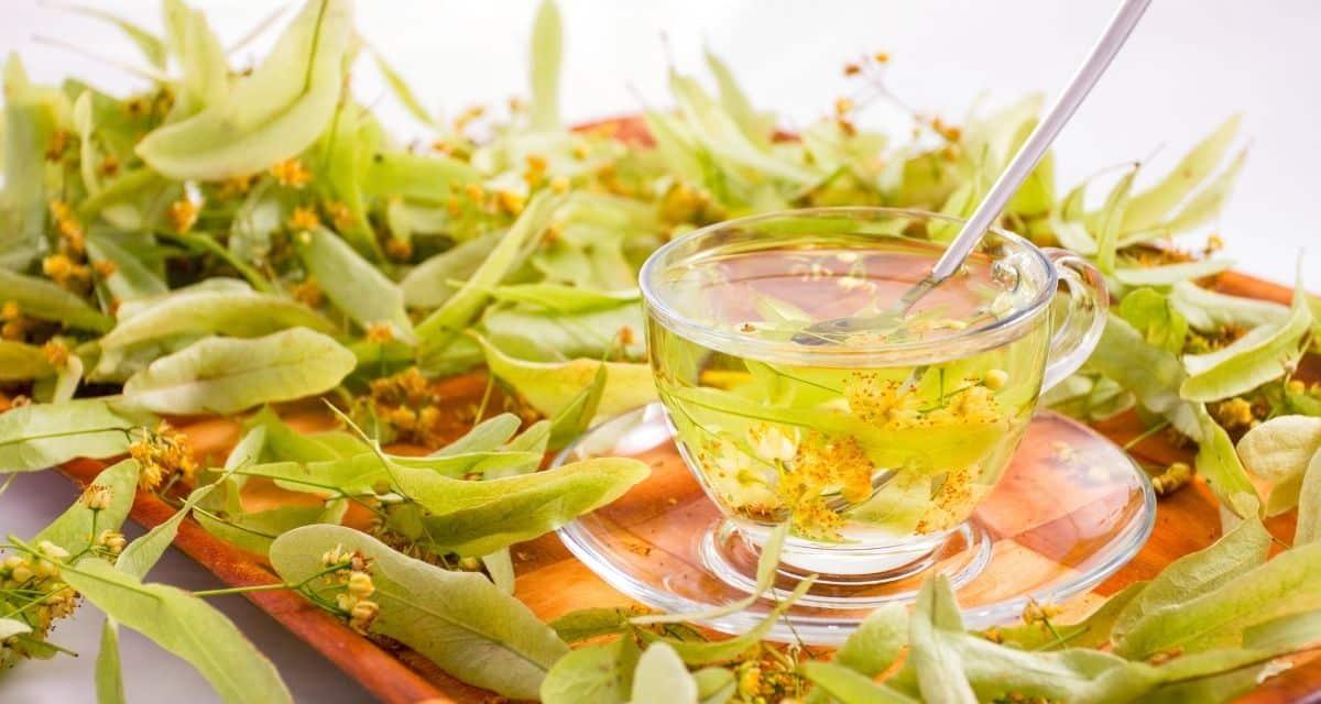 A hárs tea évszázadok óta értékelik erős nyugtató tulajdonságai miatt. A Tilia fák nemzetségéből származik, amely jellemzően Észak-Amerika, Európa és Ázsia mérsékelt égövi területein növekszik. A Tilia cordata, más néven kislevelű mész, a Tilia nemzetség leghatékonyabb fajának számít.