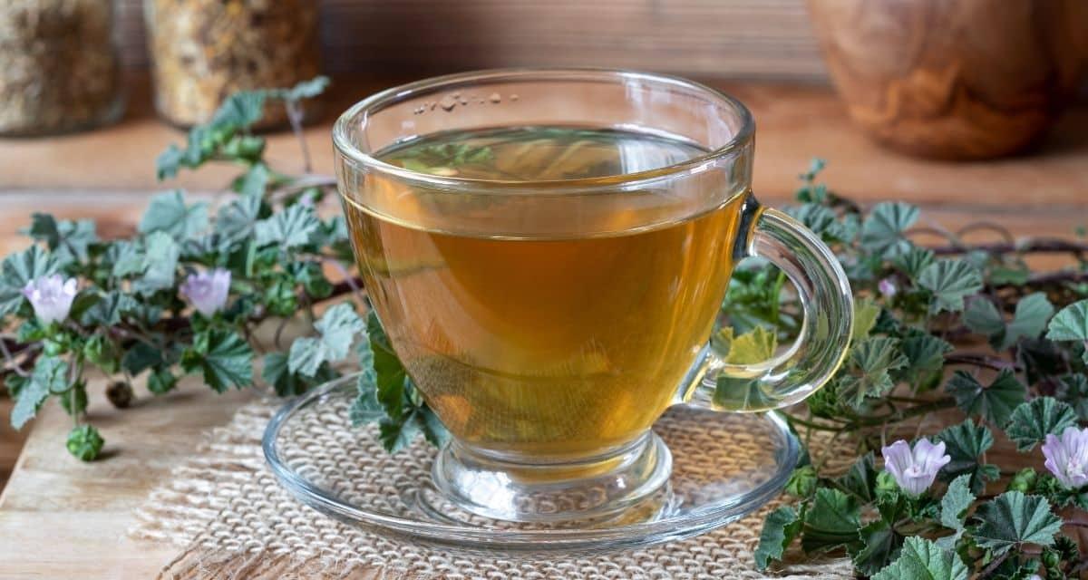 """Mályva tea hatása a világszerte elterjedt és a nyugtató hatása miatt értékelik. De miben különbözik a mályva tea a hibiszkusztól? Hogyan működik pontosan ez a gyógynövény, amelyet gyakran """"sajt nyárnak"""" is neveznek? Hol lehet mályva teát vásárolni, és milyen mellékhatásai vannak?"""
