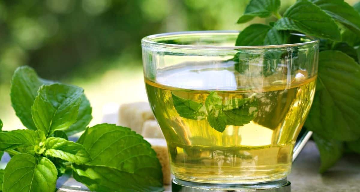 A menta tea egy gyógytea, amelyet friss aromája és nyugtató íze miatt világszerte nagyra értékelnek. A menta tea előnyeit széles körben népszerűsítik, de nem mindegyiket támasztják alá a tanulmányok. Más típusú menta tea - például a Skinny menta tea - népszerűvé vált, részben a menta tea hatása és előnyein alapulva.
