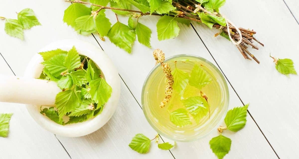 """A sok C-vitamint tartalmazó fa leveleiből gyógyszereket készítenek. A nyírfalevél tea hatásai a húgyúti fertőzések esetén alkalmazható, amelyek befolyásolják a vese, a hólyag, az ureter és a húgycsőt. Vízhajtóként is használják a vizelet mennyiség növelésére. Vannak, akik nyírfát és sok folyadékot visznek be az """"öntözési terápiára"""", hogy ürítsék a húgyutakat."""