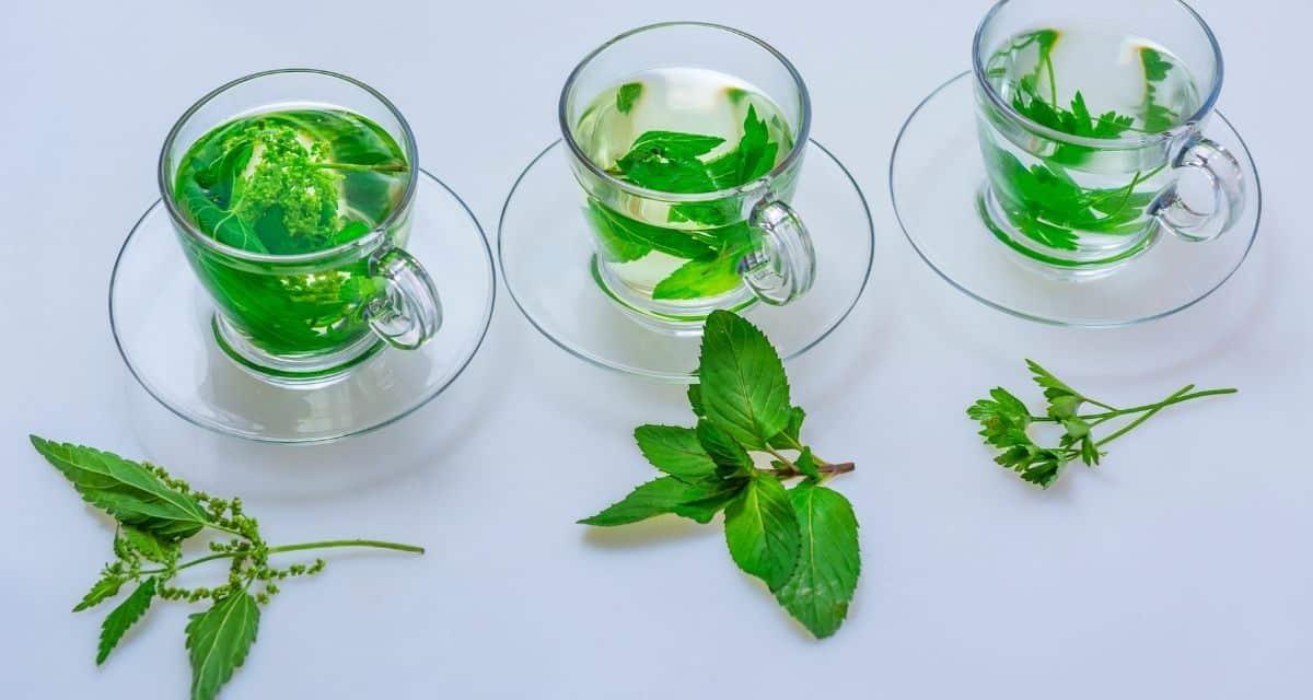 A petrezselymet a szakácsok általában köretként használják és ízesítik a sós ételeket. De mire jó a petrezselyem tea?