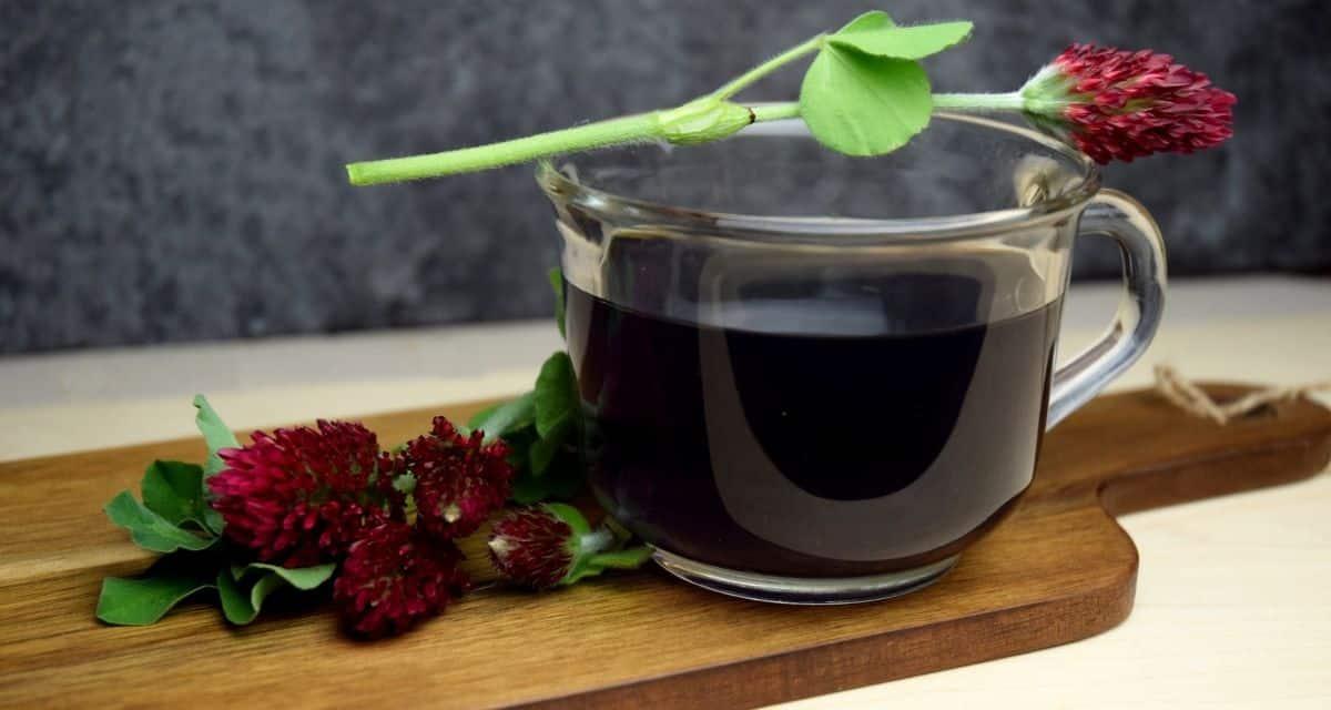 """Az egészségügyi szakemberek úgy vélik, hogy a vöröshere tea """"megtisztította"""" a vért vízhajtóként (segítve a szervezet megszabadulását a felesleges folyadéktól) és köptetőként (segítve a tüdőt a nyálkahártya megtisztításában), javítva a keringést és segítve a máj tisztítását."""