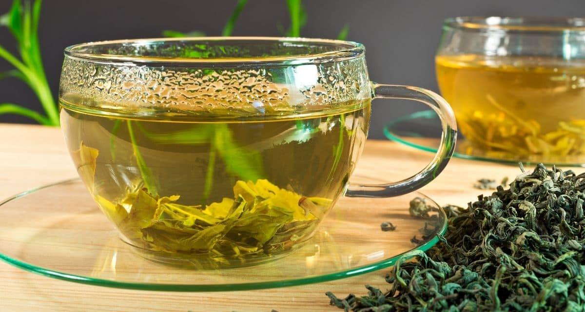 Beszámoltak a zöld tea hatásai egészségügyi előnyeiről a legkülönbözőbb betegségek esetén, ideértve a rák különböző típusait, a szívbetegségeket és a májbetegségeket. A zöld tea ezen jótékony hatásai közül sok összefügg a katechinnel, különös tekintettel a  epigallokatechin-3-gallát tartalmára. Állatkísérletekből kiderül, hogy a zöld tea katechinek mögöttes mechanizmusai és biológiai hatásai vannak. Emberi vizsgálatok is folynak a zöld tea katechinek metabolikus szindróma, például elhízás, II. Típusú cukorbetegség és kardiovaszkuláris kockázati tényezők kezelésére történő felhasználásáról.